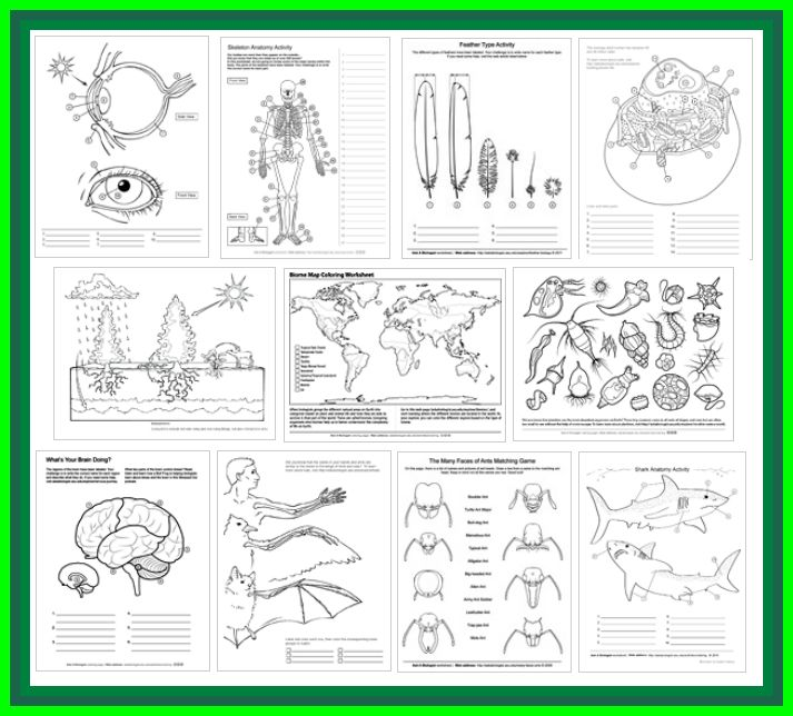 30 Best Kindergarten Anatomy Images On Pinterest Life Science