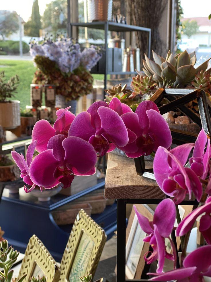 Welcome To Sapphire Florist Sapphire Florist Unique Flowers Floral Arrangements Floral Gifts