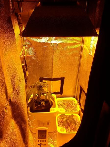 To do's and not to do's for your #garden in a grow tent.  #plants #growyourown #hydro #greenhouse #farm #homegrown