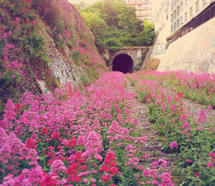 Abandoned Inner City Railway In Paris.