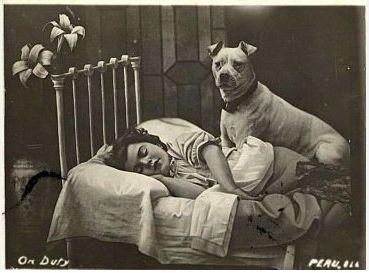 Untitled | Pitbull terrier, Nanny dog, Vintage dog  |American Pit Bull Terrier Vintage