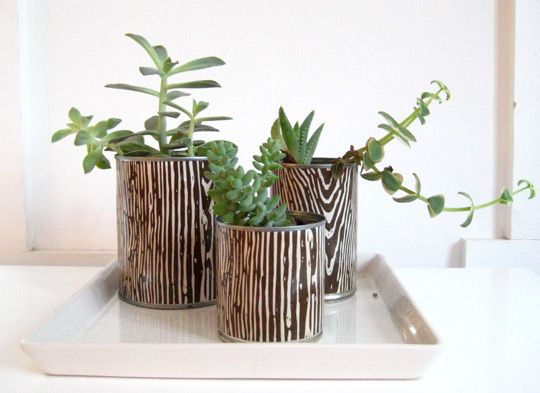 DIY soup can planters with succulents