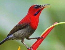 http://hargacara.com/harga-burung-kolibri.html