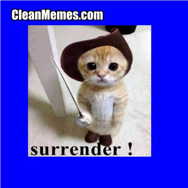 Funny Memes Clean Cats : Best images about love your cat on pinterest warrior