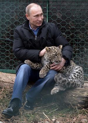 Vladimir Putin pets a snow leopard