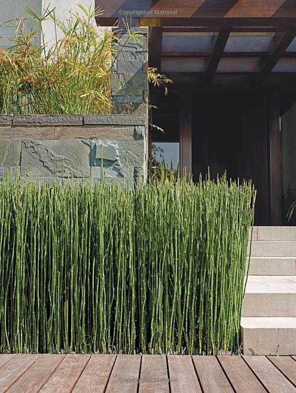 love this plant. Coastal Modern: Tim Clarke, Jake Townsend: