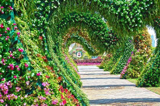 Miracle garden dubai los jardines mas hermosos del mundo for Fotos de jardines bonitos