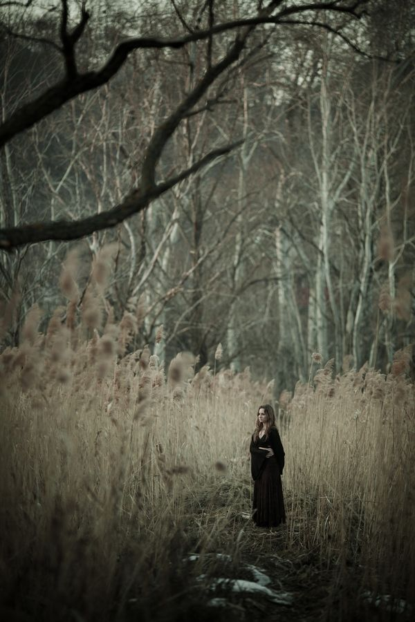 In the woods #fantasy #story #fairytale