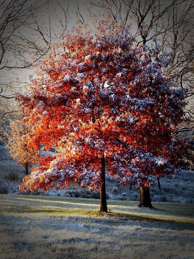 Seasons CollideSeasons Collider, Nature'S Colors, Beautiful Trees, Snowy Autumn, Beautiful Places, Autumn Snow, Autumn Colors, Nature Beautiful, Fall Seasons