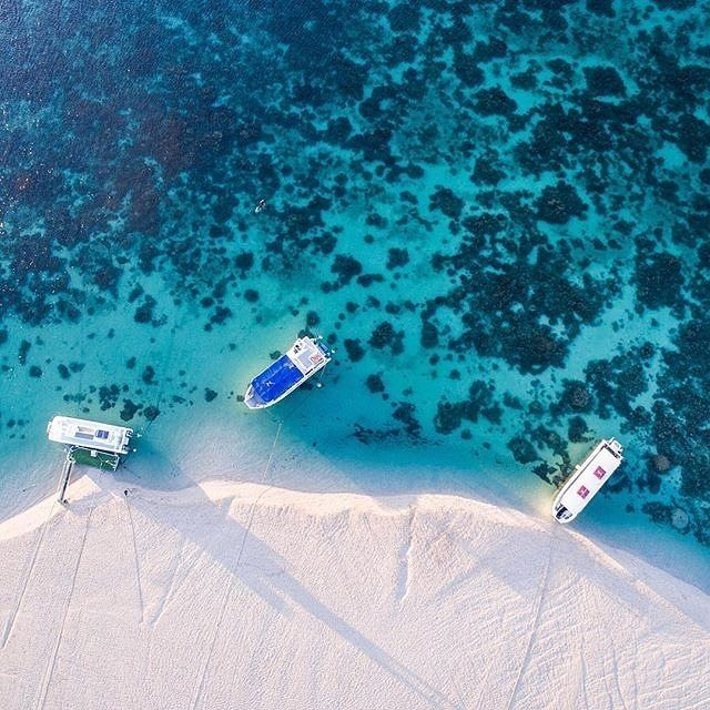 In @australiascoralcoast, you can literally snorkel right off the beach - that's…