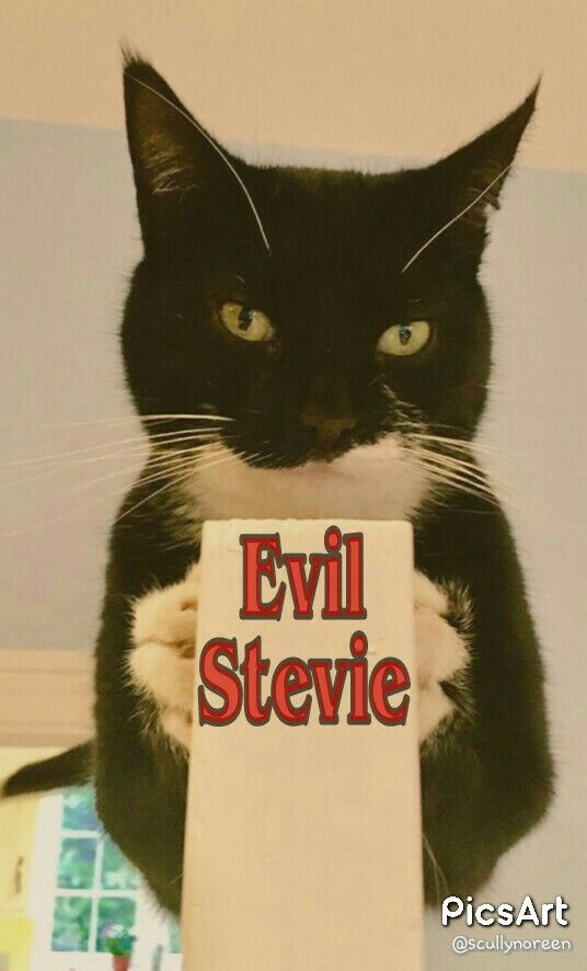"""Here's the reason for the FABULOUS  """"Weeti Gang"""" cats on Twitter....Evil Stevie Cat....they love him unconditionally. ...even though he's kind of a twat..."""