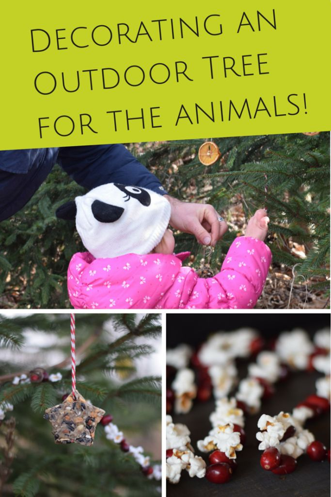 decorating a outdoor tree with edible ornaments for the animals