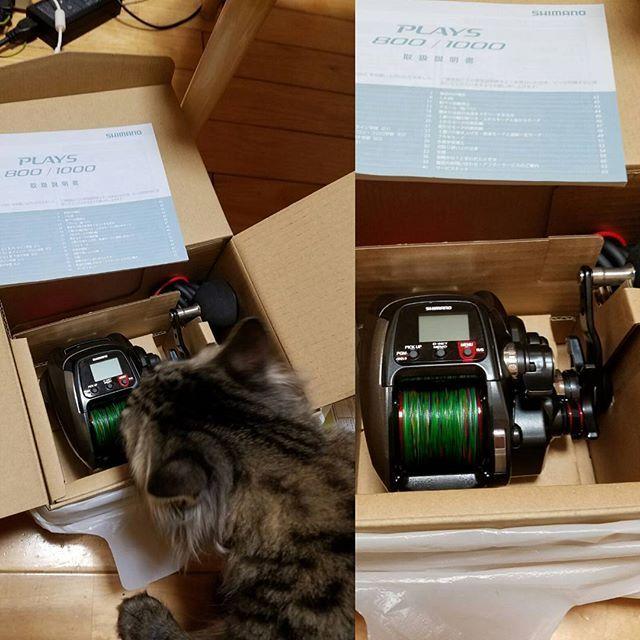完全な衝動買いしちゃいました (;´・ω・)くうさんいっぱい釣って来るからな! #愛猫 #猫 #お山の大将ならぬキャットタワーの大将 #猫の名は #くう #海釣り #船釣り #電動リールの力を見よ #釣り好き