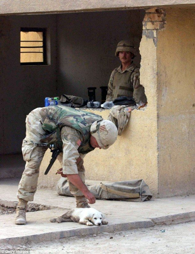 Heart warming: A U.S. soldier from Alfa Company 1-18 Infantry pats a dog while on duty at a guard shack in Balad, Iraq, in July 2003