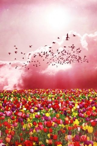 Cielo de rosa.