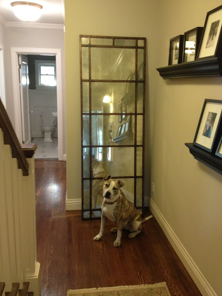 Perfectly posed, our homeowner's dog Lucy was happy to show off the Uttermost Avidan Mirror, #13332 P, features a narrow metal frame finished in heavily antiqued gold leaf with antiqued style mirrors. Now that deserves a treat!