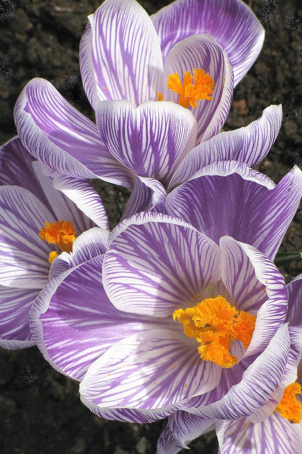 140 best deer resistant flowers and plants images on pinterest