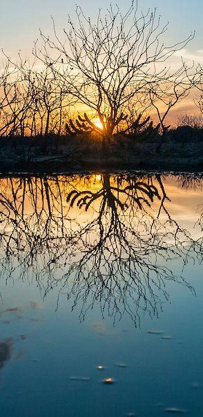 Vegetação de caatinga e pôr do Sol refletindo nas águas das primeiras chuvas | Caatinga vegetation and sundown reflecting on the waters of the first rains