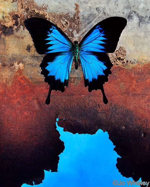 Ulysses blue