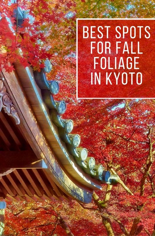 Best Japan Images On Pinterest Traveling Colors And Fingers - This amazing image is being called the most beautiful photo of kyoto ever