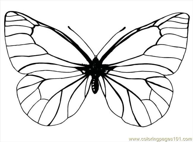Butterfly Coloring Sheets Printables