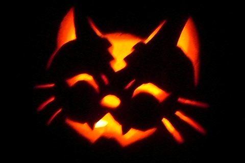 Halloween Pumpkin Carving Cat Patterns  Pumpkin Carving Pattern