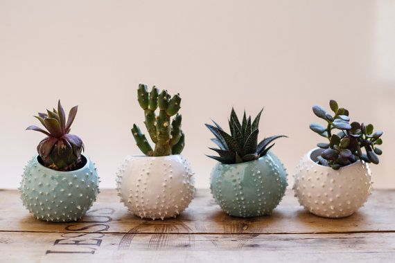 Small handmade ceramic succulent planter white by OlisCupboard