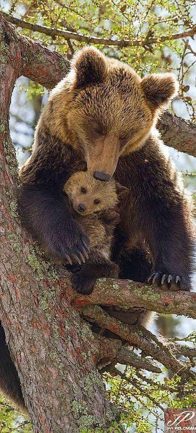 Bear mom with her cub by Jan Pelcman.