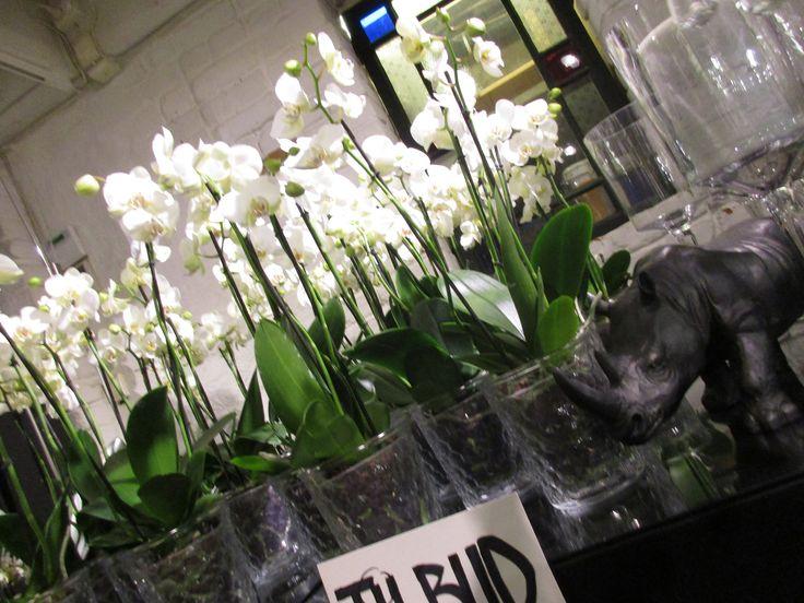 Hvite blomster i glassvaser
