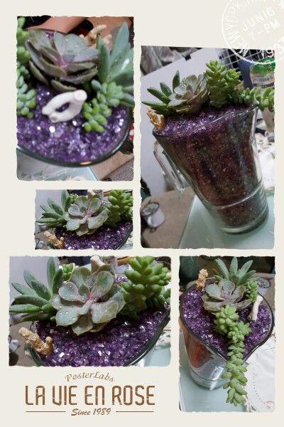 Succulents in jug.