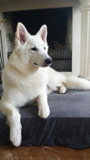 """Deirdre had bij haar thuis ook een witte hond genaamd """"Rye"""". Haar familie had deze hond al voordat ze geboren was. Maar eigenlijk moest de hond zo snel mogelijk weg want de hond hat ook met de Faeries te maken. Luke zei tegen Deirdre dat ze de hond moest verdrinken want dan zou ze veiliger zijn."""
