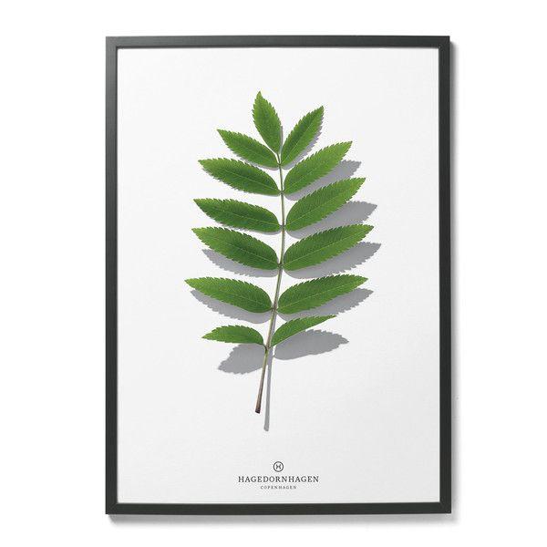 Plakat Hagedronhagen-liść | Designzoo
