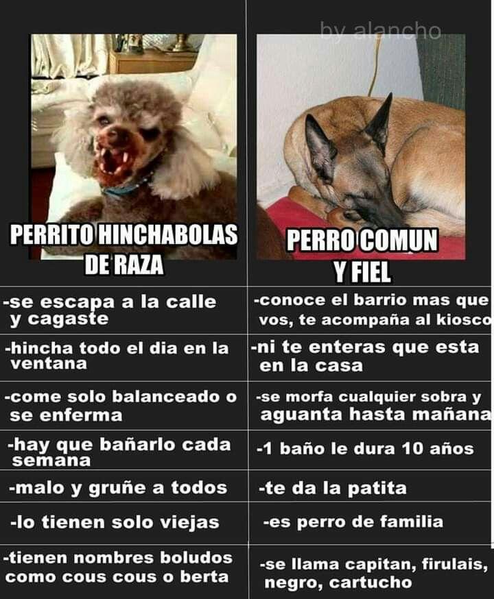 Pin De Mirta Mabel Gonzalez En Chistes Perros Frases Chistes De Perros Cosas Para Perros