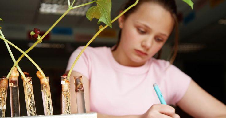 ¿Cuáles son las variables dependientes e independientes en la ciencia para niños?. Aunque puede que los niños sean muy jóvenes para estar familiarizados con los métodos de experimentación, no son demasiado jóvenes para entender el significado de los conceptos. Si puedes explicar y demostrar los conceptos que hay bajo un método científico de una forma adecuada para la edad, los niños pueden entender cómo funciona. Con tu ayuda y ...
