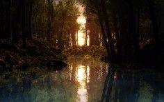 dusk forest pond wide hd wallpaper
