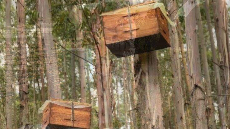 African Honey Bee on Vimeo