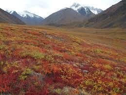 Autumn colors sweep across the tundra near Galbraith Lake. Photo by Jason Neely. Autumn colors sweep across the tundra near Galbraith Lake.