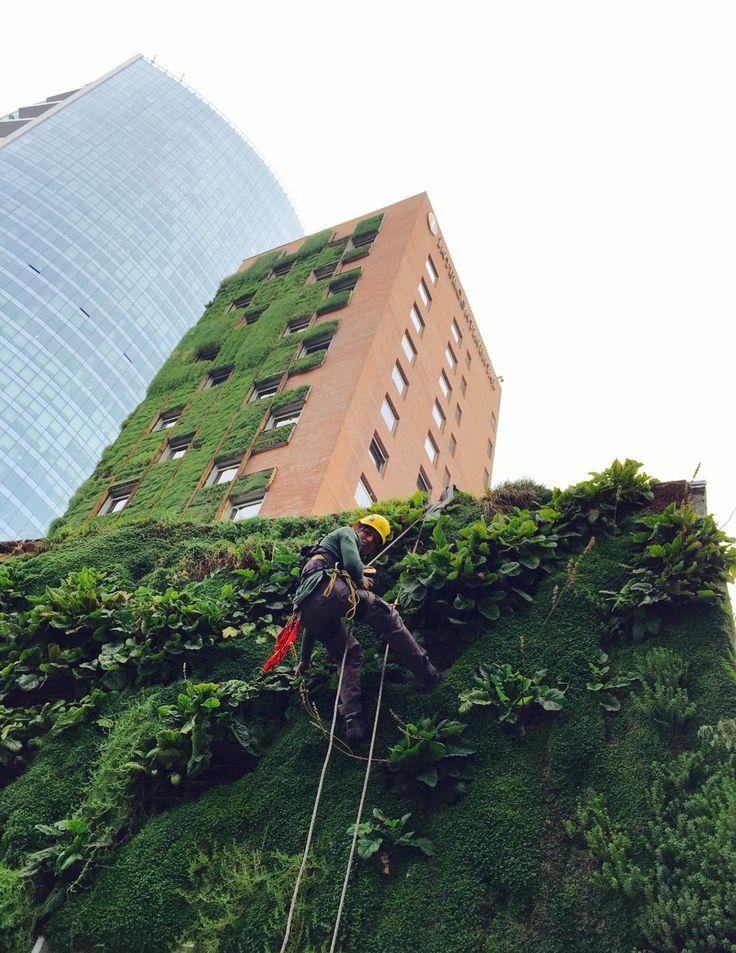 Green Wall Hotel Intercontinental Chile Llaupangue