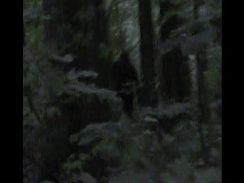 Incredible Bigfoot Footage (2013) - YouTube  not soo sure that the sound is real check it out at 1:38