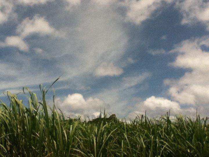 Ie-island, Okinawa/伊江島タッチューをサトウキビ畑から望む