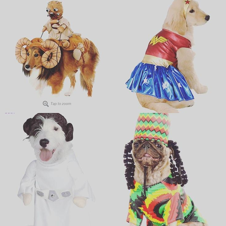 #HALLOWEEN - Is it here yet? #puppy #puppies #puppylove #dogs #costumes #halloween2016