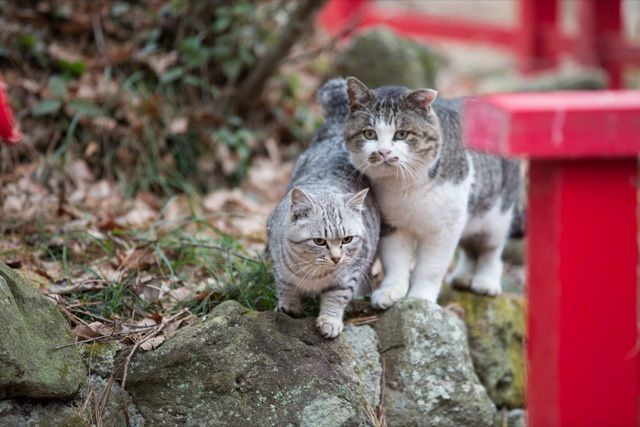 The Perfect Beauty of Cat Island - Miyagi Prefecture, Tashirojima