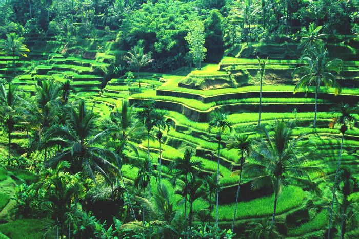 Top 10 Tourist Attractions In The World | 6. Bali.        A province of Indonesia, Bali is part of the Lesser Sunda Islands, 3.2 km east of Java. Its area is about 5,560 sq. km and its highest peak, Mount Agung, reaches 3,142 m. Volcanic in origin, Bali has a dry, mountainous coastal section and a southern plain with rainy monsoon season. The islands wildlife includes tigers and deers