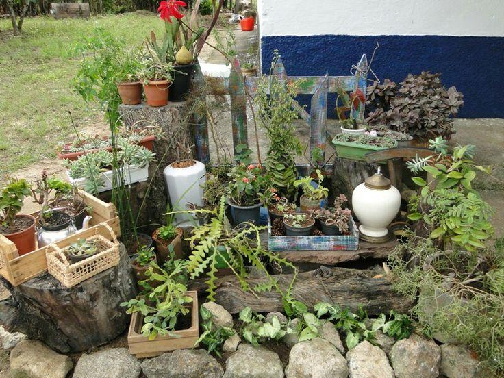 Jardim de suculentas  , casa de roça  da mamãe