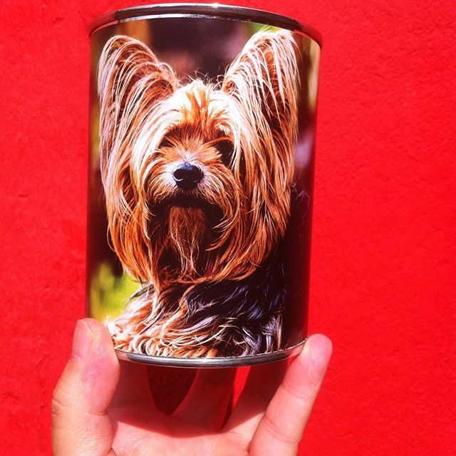 Do you want a picture with your own pet on a can? mail info@dutchair.eu.   #dog #hond #hondje #huisdier #pet #hengelo #ilovemydog #kat #cat #can #cadeau #nicegift #nederland #happy #holland #blik #blikje #blikjes #blikken #blikjemetlucht #canned #cannedair #love #074 #foto #photo #picture #kunst #konijn #rat