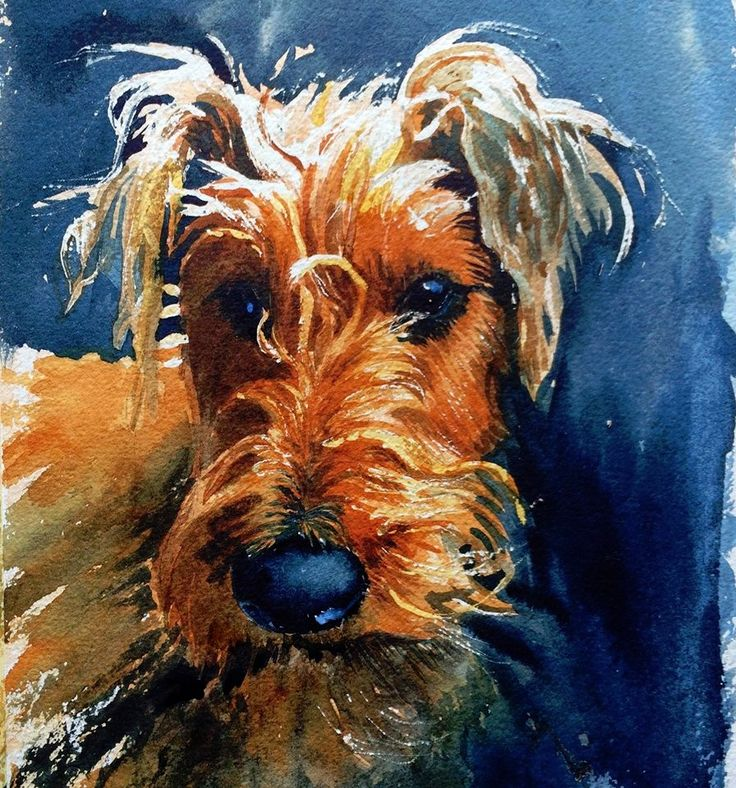 Watercolour of my Irish Terrier Gilly