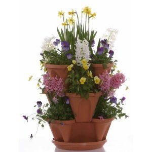 Ornamental Container Gardening Guide