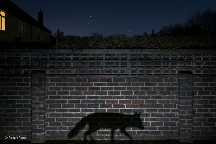 Shadow walker - Richard Peters/Wildlife Photographer of the Year 2015