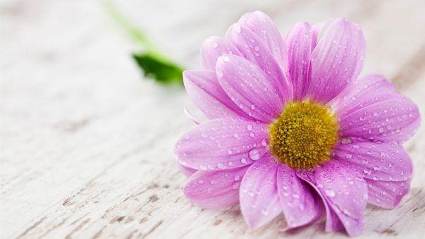 imagens de flores da primavera