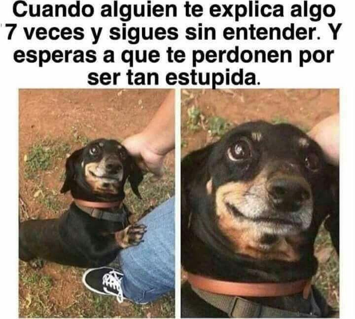 pasa XD
